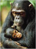 Jane Goodall : retour à Gombe