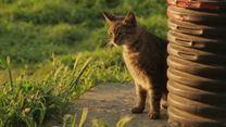 """Kedi - Des chats et des hommes EXTRAIT VO """"Chasser les rats"""""""