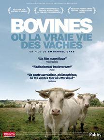 Bovines streaming