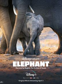 Eléphants streaming