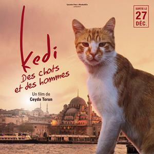 Kedi , Des chats et des hommes  Affiche