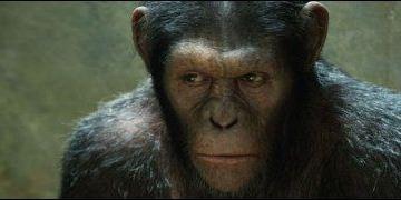 1ères séances : le retour gagnant des singes