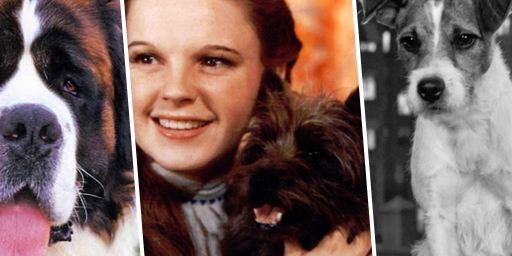 Rintintin, Lassie...Ces animaux du cinéma et des séries