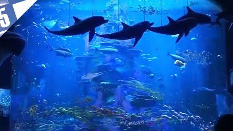 Le Top 5 des aquariums au cinéma