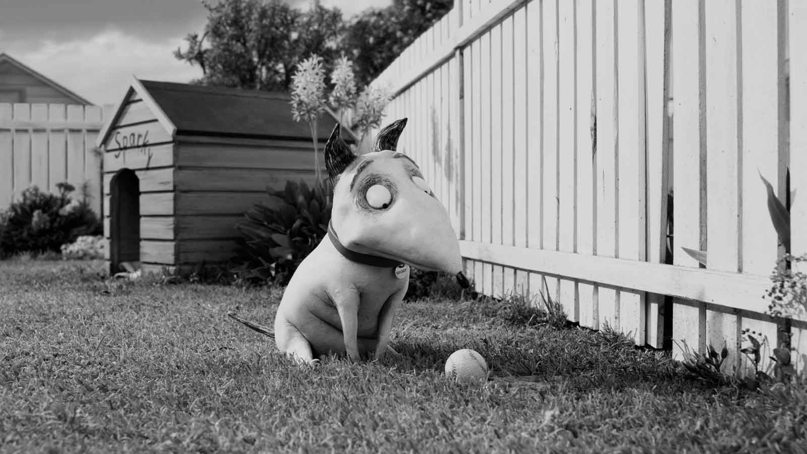 Frankenweenie : Photo Tim Burton