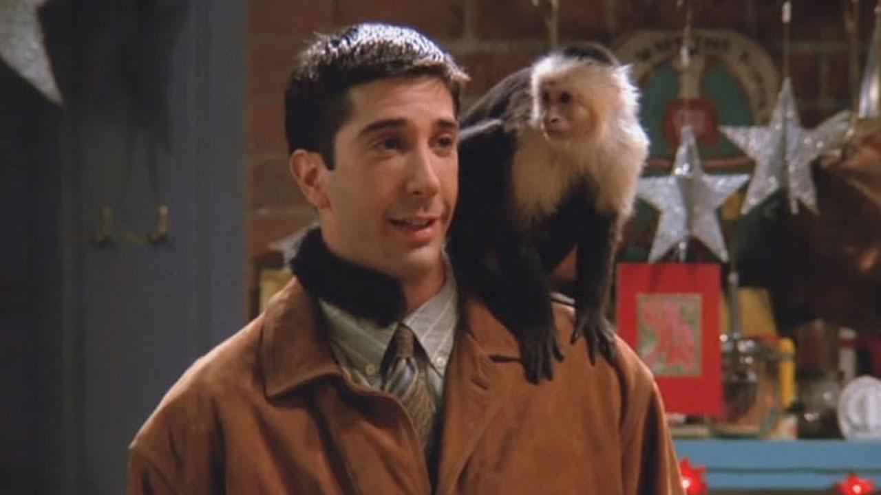 Friends : on a retrouvé le singe Marcel et il joue encore la comédie !
