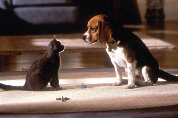 Comme chiens et chats : Photo Lawrence Guterman