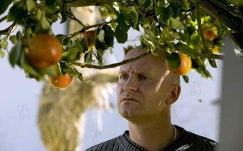 Adam's apples : Photo Ulrich Thomsen