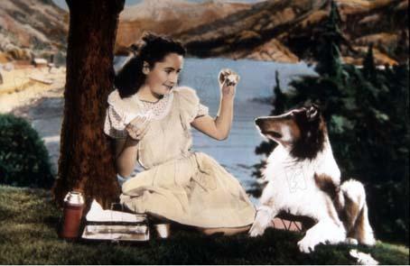 Le Courage de Lassie : Photo Elizabeth Taylor, Fred M. Wilcox, Lisa Wilcox