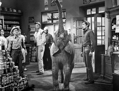Hatari! : Photo Howard Hawks, John Wayne, Red Buttons