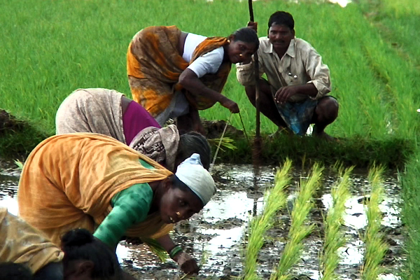 Solutions locales pour un désordre global : photo