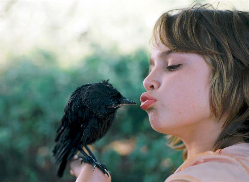 Little Bird : Photo Rick Lens