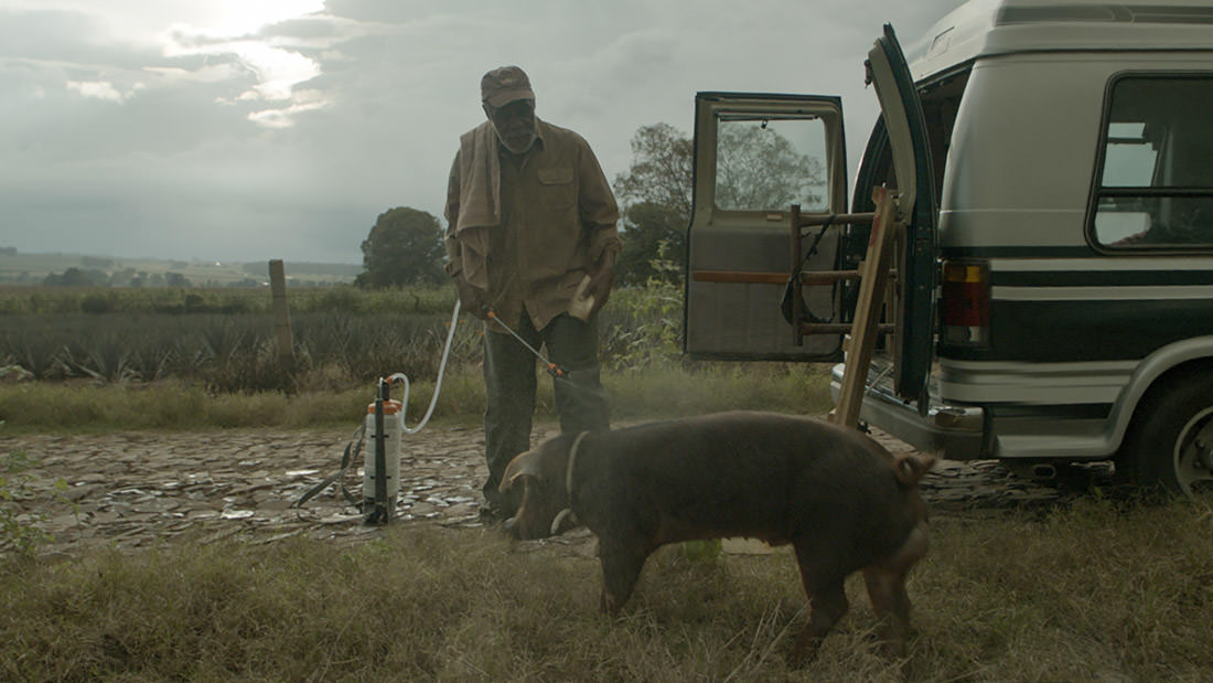 Mr. Pig - Catégorie première
