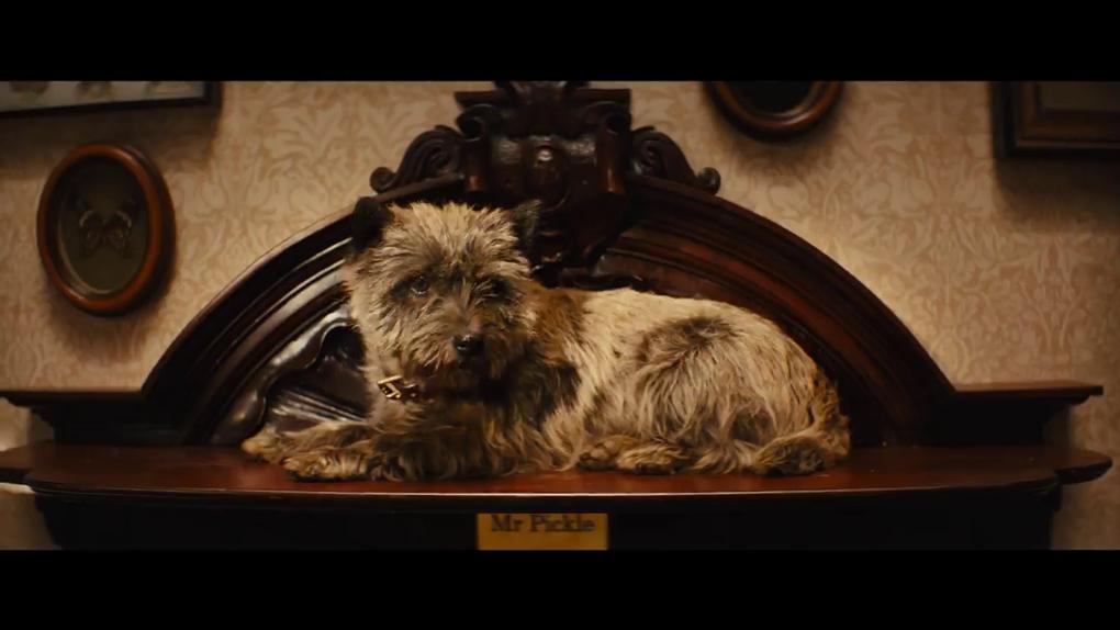 Ce chien répond donc au nom de M. Cornichon en français