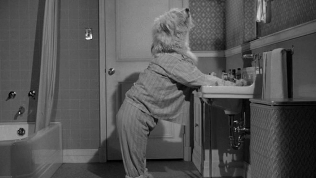 Quelle vie de chien (1959)