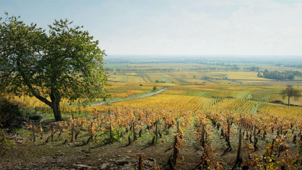 """En Bourgogne-Franche-Comté a été tourné... """"Ce qui nous lie"""""""
