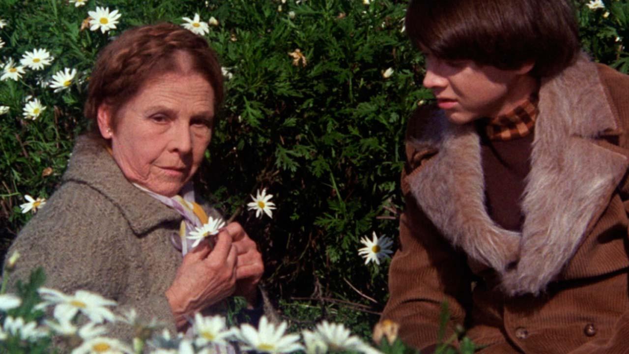 Harold et Maude : Photo