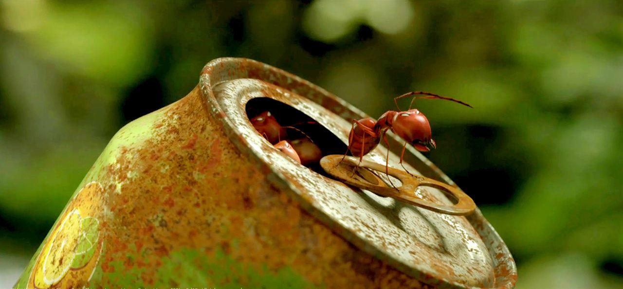 Minuscule - La vallée des fourmis perdues : Photo