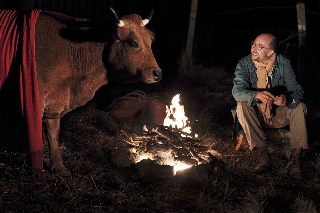 La vache : Photo Fatsah Bouyahmed
