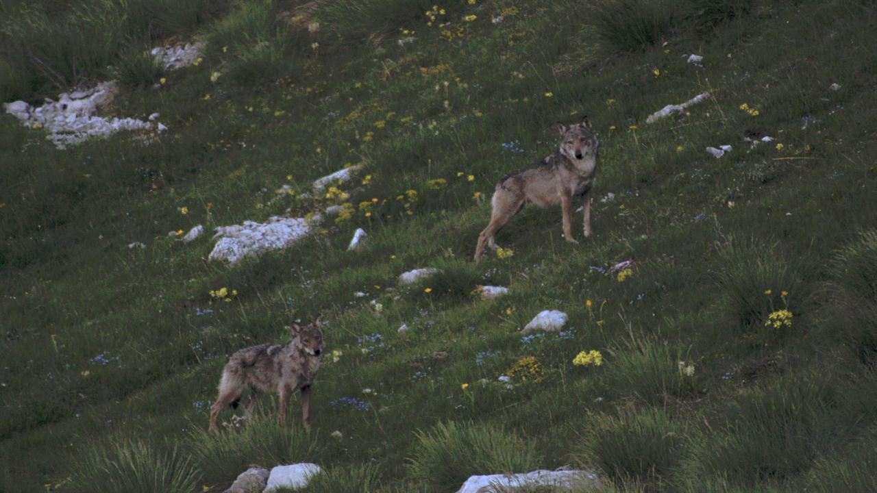 La Vallée des loups : Photo