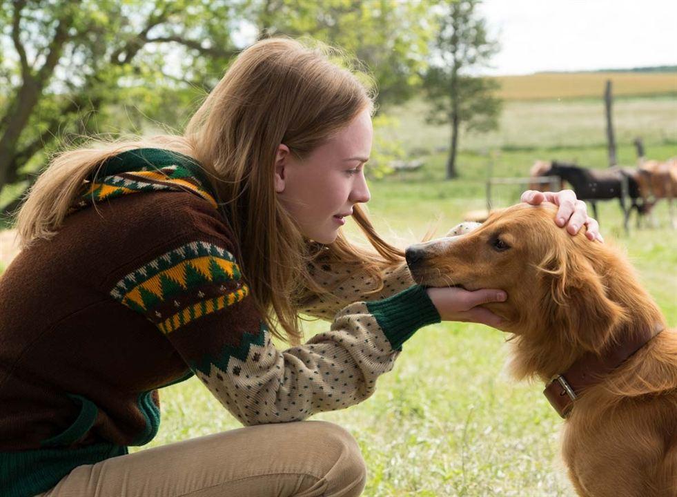 Mes vies de chien : Photo Britt Robertson