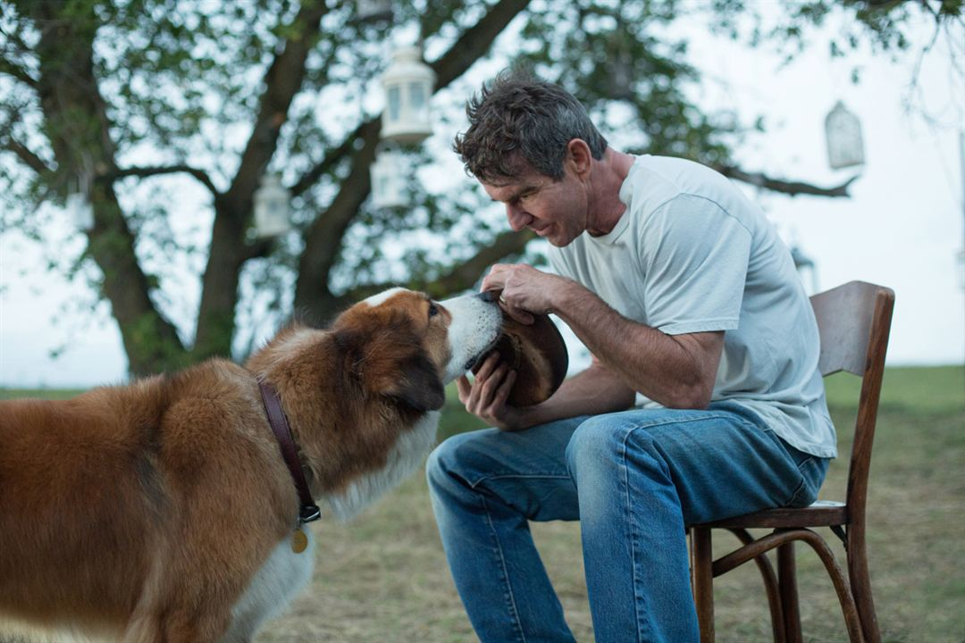 Mes vies de chien : Photo Dennis Quaid
