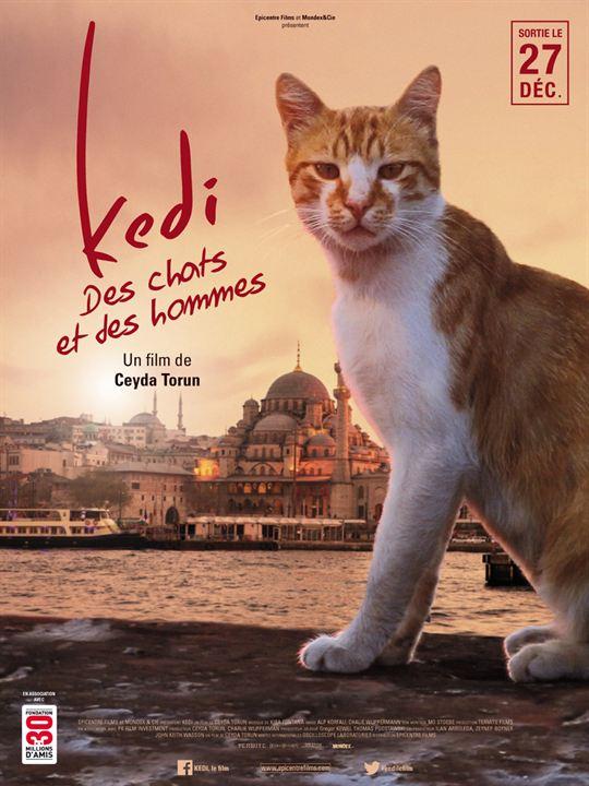 Kedi - Des chats et des hommes : Affiche