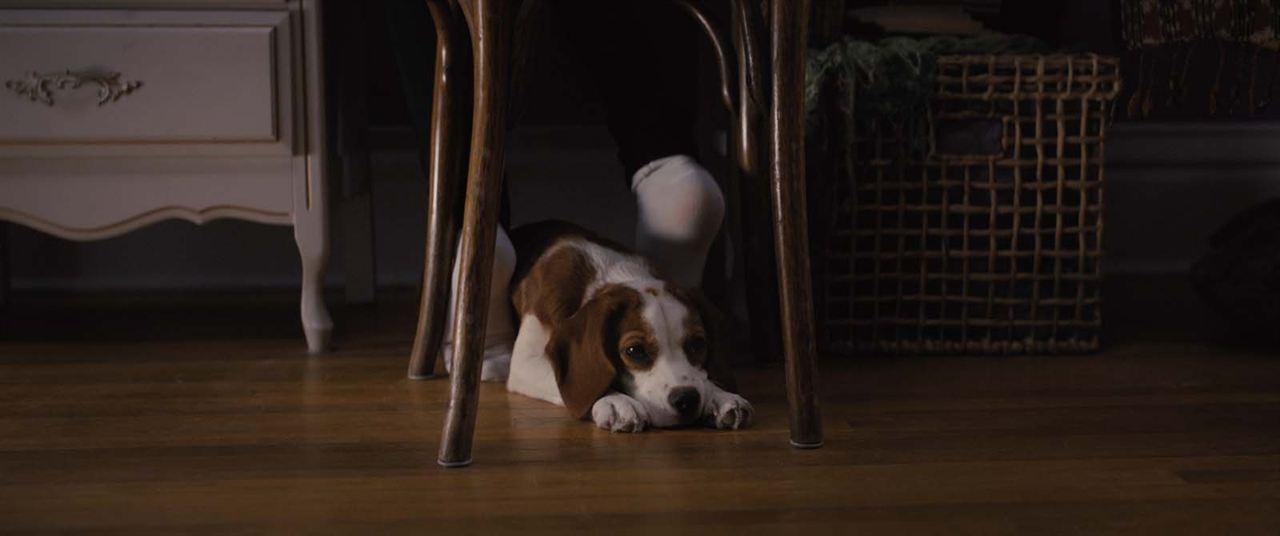 Mes autres vies de chien : Photo