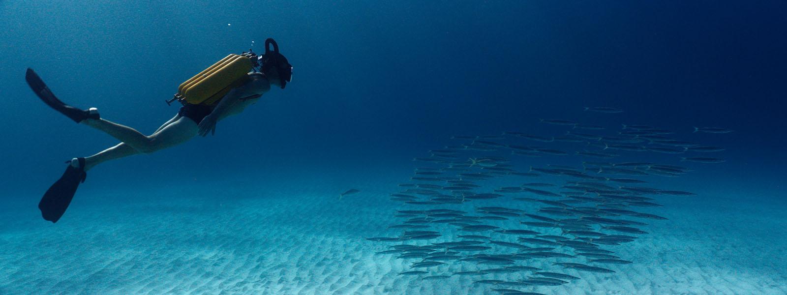 Les plans sous-marins sont juste magnifiques