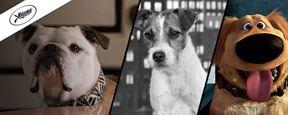 Palm Dog : quand Cannes récompense... le meilleur chien du Festival !