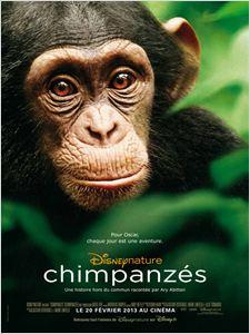 Chimpanzés affiche