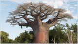 Echappées belles - Madagascar, à la recherche du monde perdu