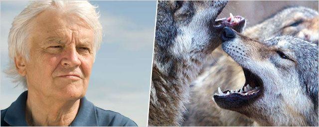 """Jacques Perrin : """"Le monde sauvage et libre, ce n'est pas un monde redoutable"""""""
