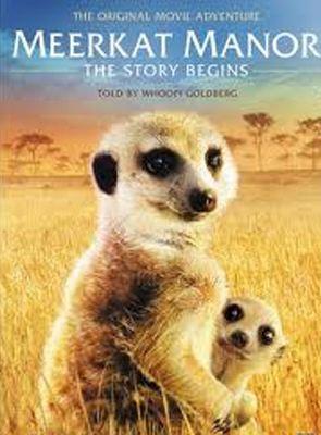 Bande-annonce Le Clan des suricates, l'aventure commence
