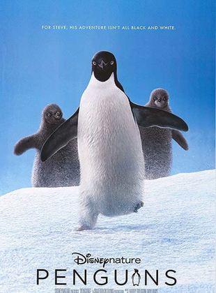 Bande-annonce Penguins