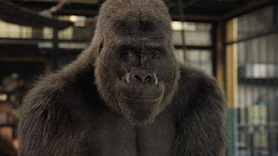 Le Seul et unique Ivan sur Disney+ : l'incroyable histoire vraie d'un célèbre gorille