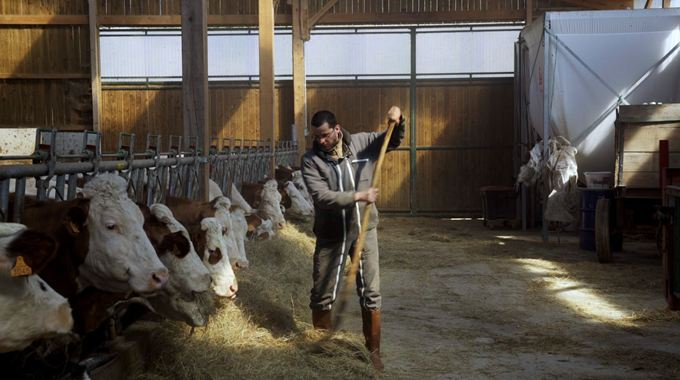 Photo du film Cyrille, agriculteur, 30 ans, 20 vaches, du lait, du beurre, des dettes