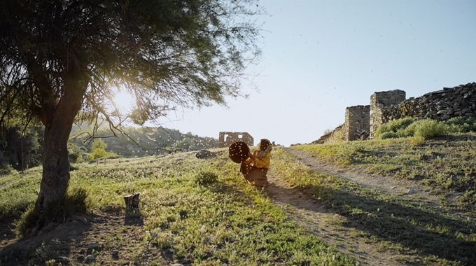 Photo du film Honeyland