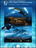 Télécharger Dauphins et baleines 3D, nomades des mers HD VF Uploaded