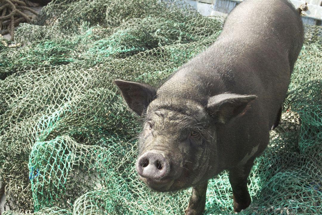 Le cochon de Gaza : Photo Sylvain Estibal