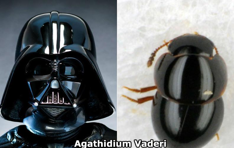Darth Vador